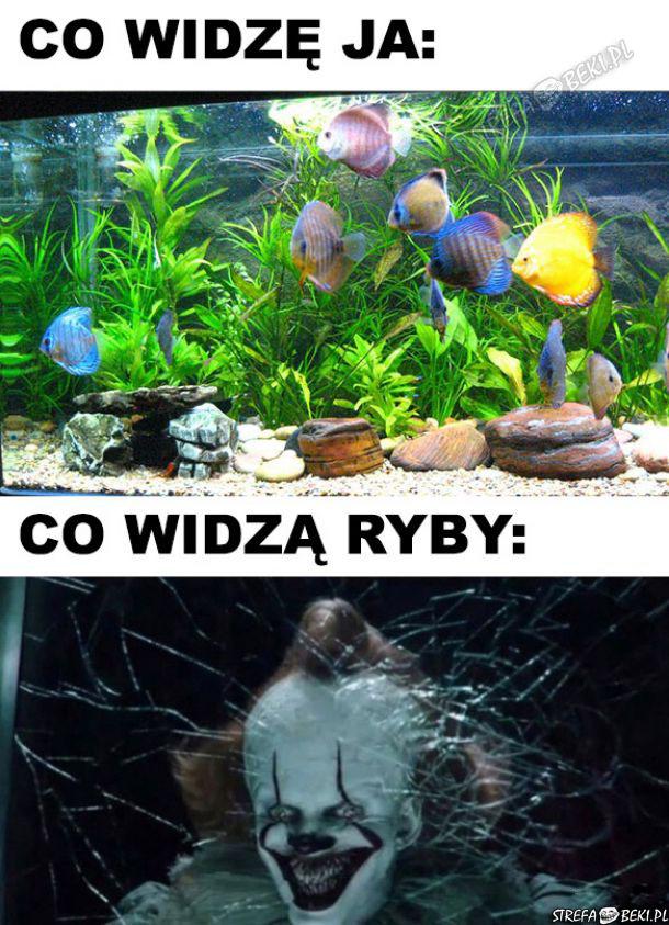 Co widzę Ja vs co widzą ryby