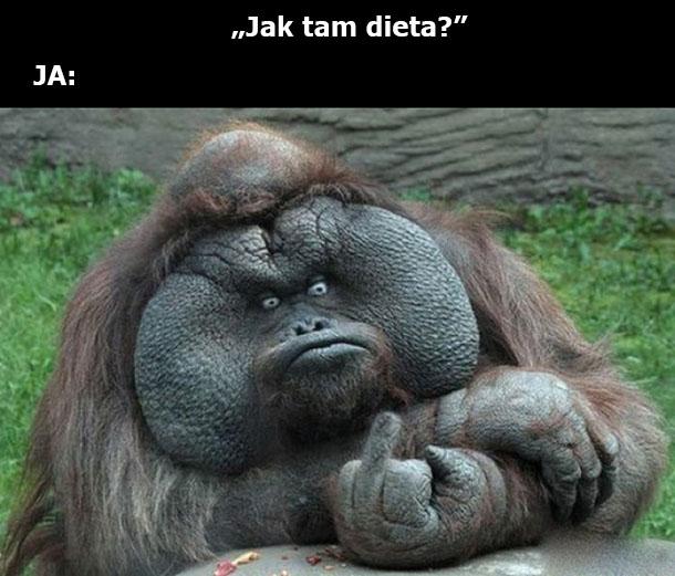 Jak dieta?