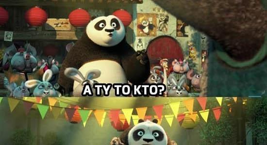 Pandy nie grzeszą inteligencją