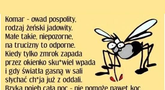 Cholerne komary