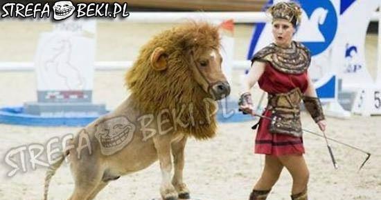 Gdy nie ma hajsu na lwa