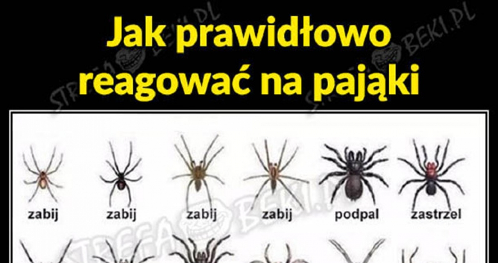 Jak prawidłowo reagować na pająki