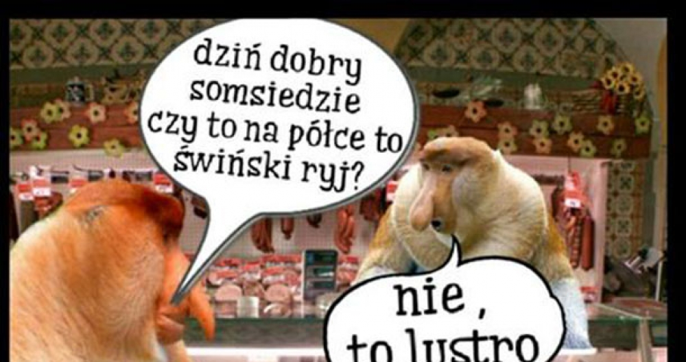 Janusz i somsiad