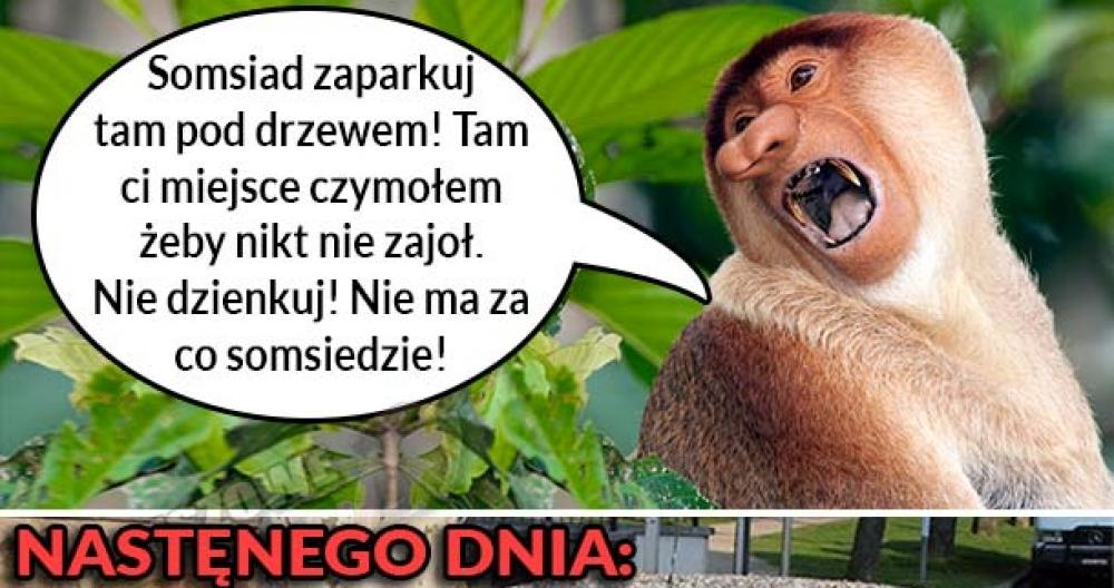 Pomocny Janusz :D