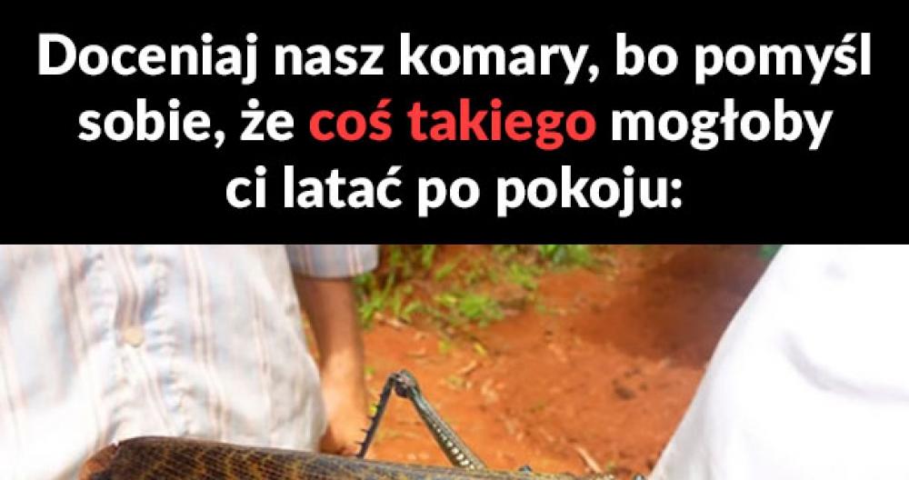 Nasze komary nie są złe